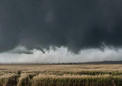 Ураган на пшеничном поле