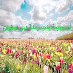 Умм Хабиба
