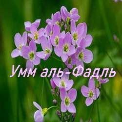 Умм аль-Фадль